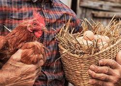 İstehsalından bir gün əvvəl satışa çıxarılan yumurtalarla bağlı AÇIQLAMA