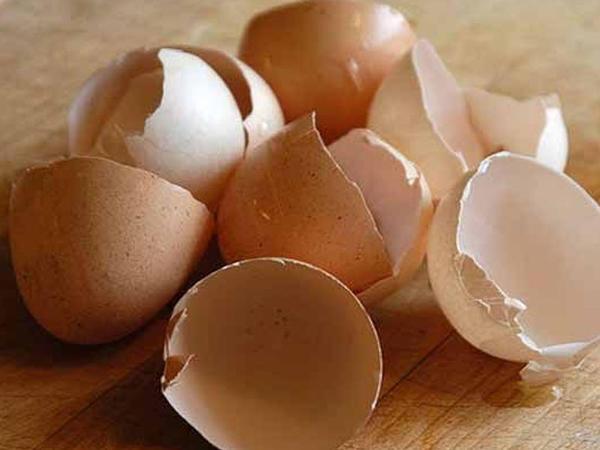 Yumurta qabığından enerji yığmaq mümkün oldu
