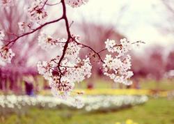 Novruz istirahətində rayonlara getmək istəyənlərin NƏZƏRİNƏ: Mart ayının hava proqnozu