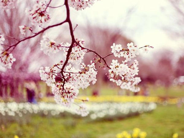 Novruz gəlir, yaz gəlir...