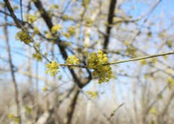 Havanın sərt keçməsi bitkilər və ağaclara mənfi təsir göstərəcəkmi?