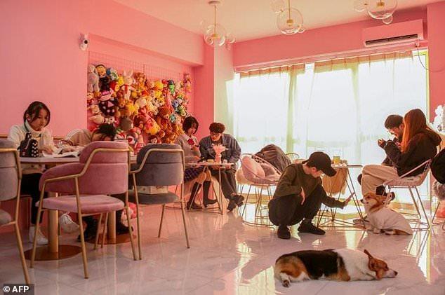 """""""Həbsxanadan qaçış"""" görüntüləri rekord vurur - VİDEO - FOTO"""