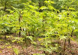 Meşələrdə yanğınların qarşısını almaq üçün şumlama işlərinə başlanılıb