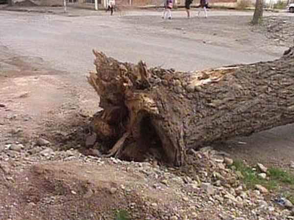 """Göyçayda külək evlərin damını uçurdu, <span class=""""color_red"""">ağacları aşırdı</span>"""