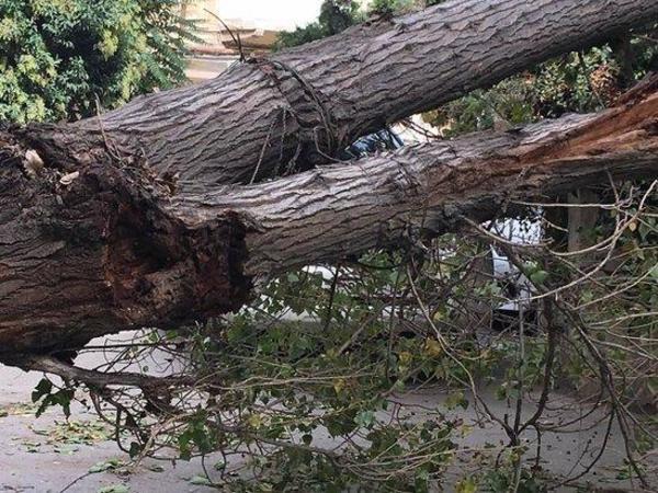 İrigövdəli ağac yaşayış binasının üstünə düşüb