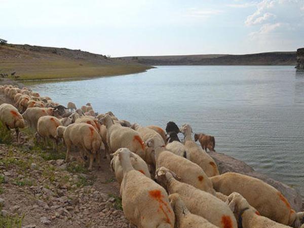 Qarqarçayın səviyyəsi kəskin artıb, çobanlar köməksiz qalıb