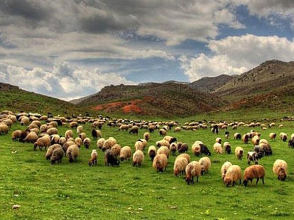 """Ağdamda sel - <span class=""""color_red"""">2 çoban və 500 qoyun xilas edildi</span>"""