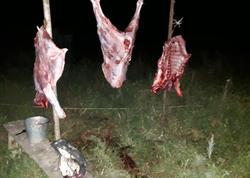 """Ölmüş heyvanların ətini satırmış - <span class=""""color_red""""> FOTO</span>"""