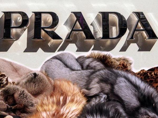 """""""Prada"""" təbii xəzdən imtina etdi"""