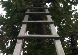 59 yaşlı kişi ağacdan yıxılıb öldü