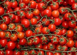 Rusiya 36 tondan çox Azərbaycan pomidorunu geri qaytardı
