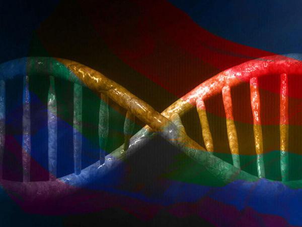 Homoseksuallıq insanlarda sosial əlaqələri inkişaf etdirmək üçün təkamül edib?