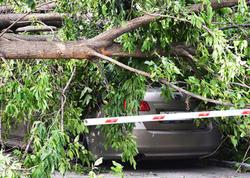 """Bakıdakı külək 15 ağacı aşırdı - <span class=""""color_red"""">Ehtiyatlı olun</span>"""