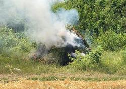 Zaqatalada 9 ton narkotik bitki məhv edildi