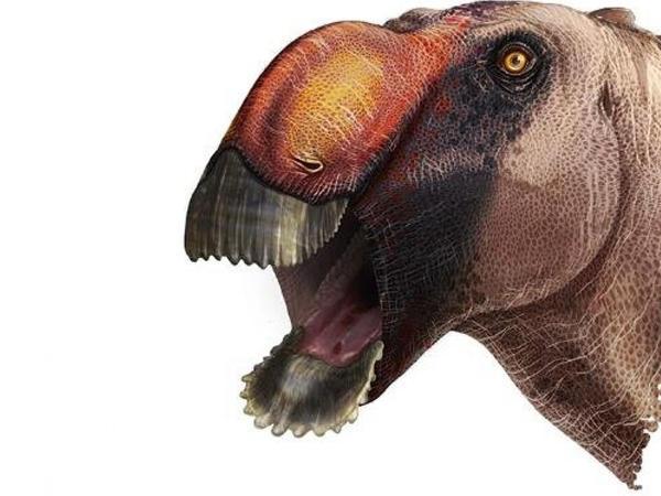 Ördək dimdikli dinozavr növü tapıldı