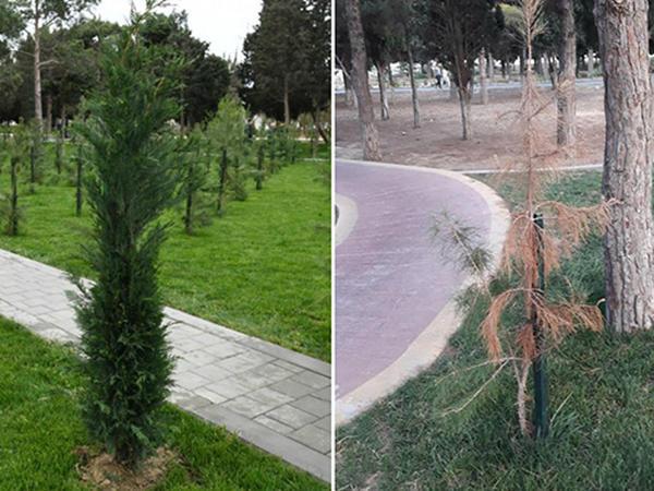 3 ay əvvəl açılışı olan parkın hazırkı vəziyyəti - FOTO