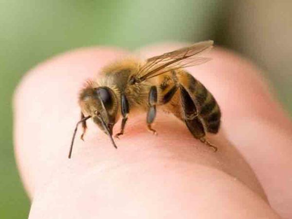 Ağstafada arı sancan kişi öldü