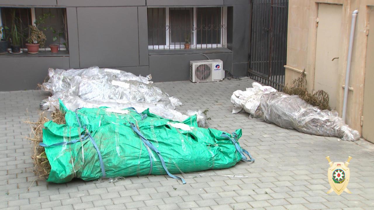 Azərbaycanda 1 tona yaxın narkotik aşkar edildi - Xüsusi əməliyyat - FOTO