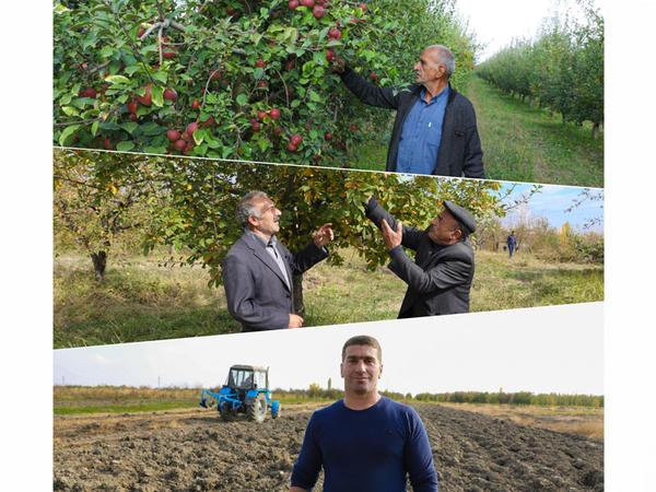 """""""Sosial Bağlar"""" layihəsi çərçivəsində 250 ailə üçün meyvə bağlarının salınmasına başlanılıb"""