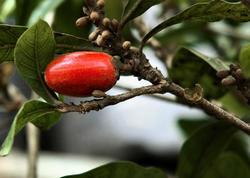 Dünyanın ən ekzotik meyvələri: ikinci hissə - FOTO