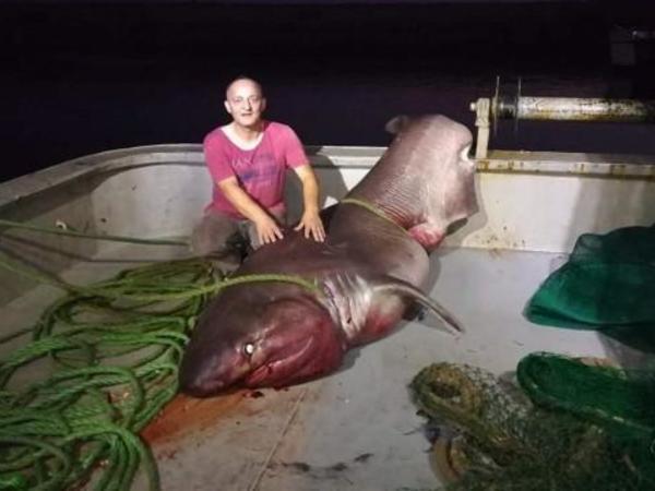 """Türkiyədə balıqçılar beş metrlik akula tutub - <span class=""""color_red"""">FOTO</span>"""
