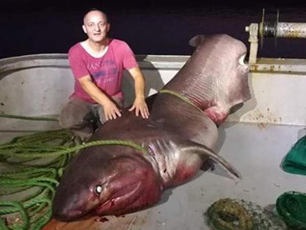 Türkiyədə balıqçılar 5 metrlik köpəkbalığı tutub