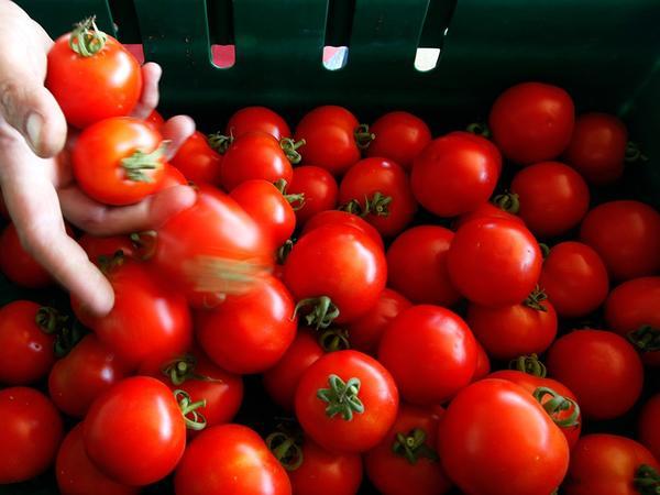 """Pomidor dazlaşma yaradırmış - <span class=""""color_red"""">Amerikalı kardioloq</span>"""