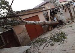 Ağac aşdı, 120 abonent qazsız qaldı - FOTO