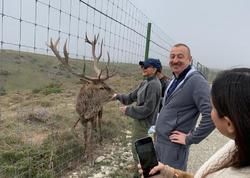 """Birinci vitse-prezident Mehriban Əliyeva: """"Gözəl diyar Azərbaycan!"""" - FOTO"""