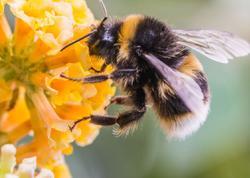 """Azərbaycanda olan arı cinsi dünyanın ən yaxşı arısı hesab olunur - <span class=""""color_red"""">SƏBƏB</span>"""