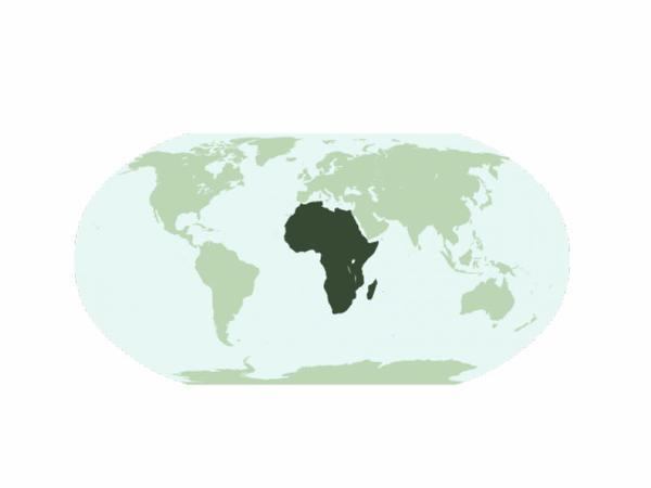Afrika qitəsinə ən çox bu ölkə sərmayə qoyub