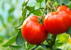 Pomidor kişi orqanizmi üçün FAYDALIDIR