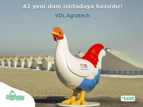 Siyəzən - Dadlı toyuqdan növbəti innovativ addım!