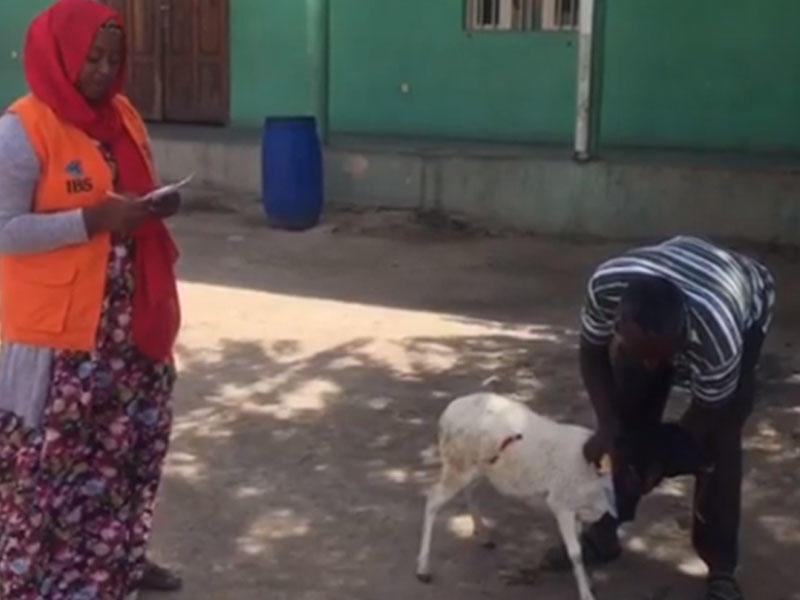 Xuraman 4-cü qızı üçün Afrikada qurban kəsdirdi
