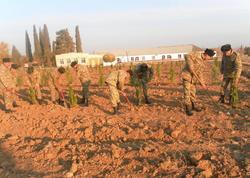 Azərbaycan Ordusunda ağacəkmə aksiyası davam edir - FOTO