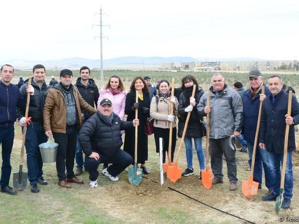 """""""Trend.az"""", """"Day.az"""", """"Milli.az"""" və """"Azernews.az"""" əməkdaşları 650 min ağacın əkilməsi üzrə aksiyada iştirak edib - FOTO"""