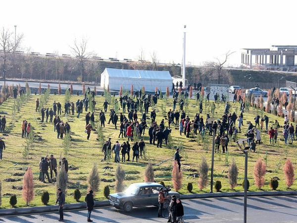 Şəkidə genişmiqyaslı kampaniya çərçivəsində minlərlə ağac əkilib - FOTO