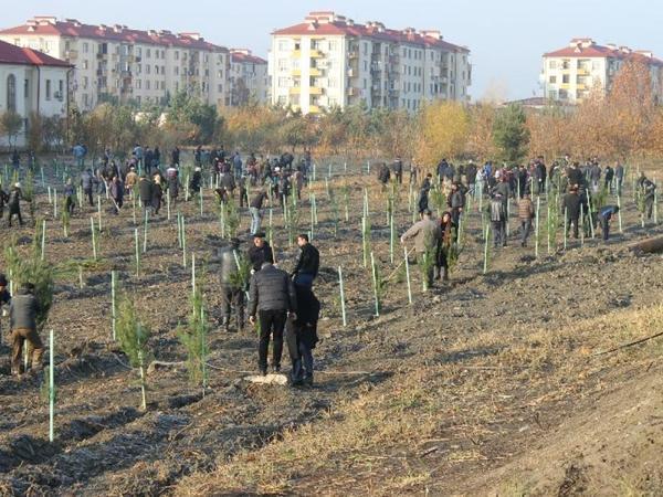 Yevlax: genişmiqyaslı kampaniya zamanı minlərlə ağac əkilib - FOTO