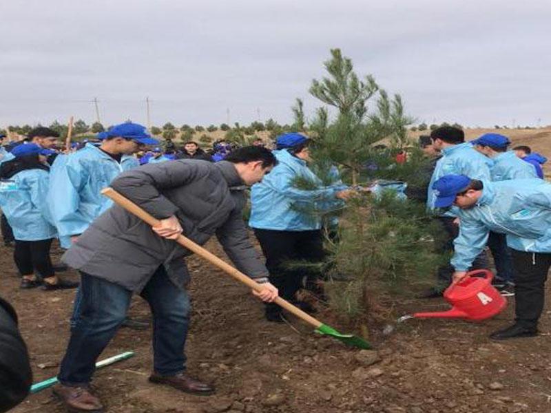 650 min ağacın əkilməsi İmadəddin Nəsiminin doğulduğu Şamaxıdan başlanıb - FOTO