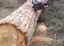 """Füzulidə 50 yaşlı kişi kəsdiyi ağacın altında qalıb, <span class=""""color_red"""">vəziyyəti ağırdır</span>"""