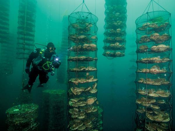 Tədqiqatlar iqlim dəyişikliyinin balıqçılığa və turizmə ciddi zərər verəcəyini göstərir