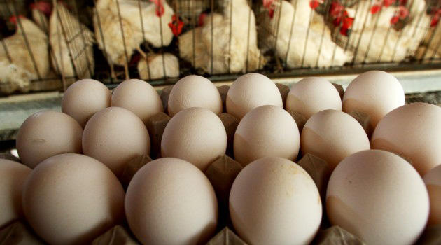 Kənd yumurtaları alarkən diqqətli olun: Çoxu eyni ölçüdə olmamalıdır