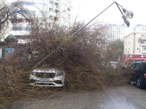 """SON DƏQİQƏ: Bakıda ağac lüks avtomobillərin üstünə aşdı - &quot;Axşam toyu olacaqdı...&quot; - <span class=""""color_red"""">VİDEO</span>"""