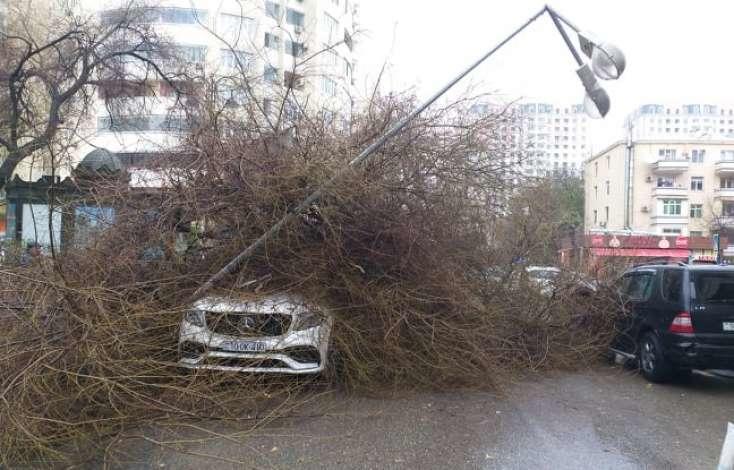 SON DƏQİQƏ: Bakıda ağac lüks avtomobillərin üstünə aşdı -