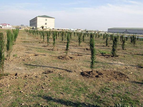 Azərbaycan Ordusu bu ay 200 mindən artıq ağac əkəcək