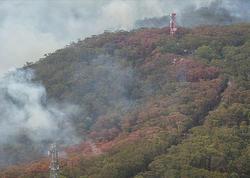 Avstraliyada 5 milyon hektar ərazi yandı