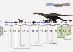Dinozavrlar soyuqqanlı deyildi
