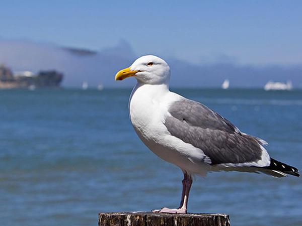 Okeanda suyun istiləşməsi 1 milyondan çox quşu öldürdü