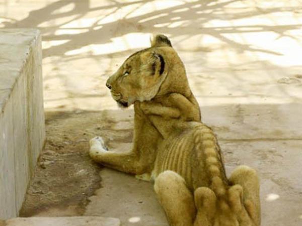 Zooparkdan paylaşılan FOTOlar hamını heyrətə gətirdi