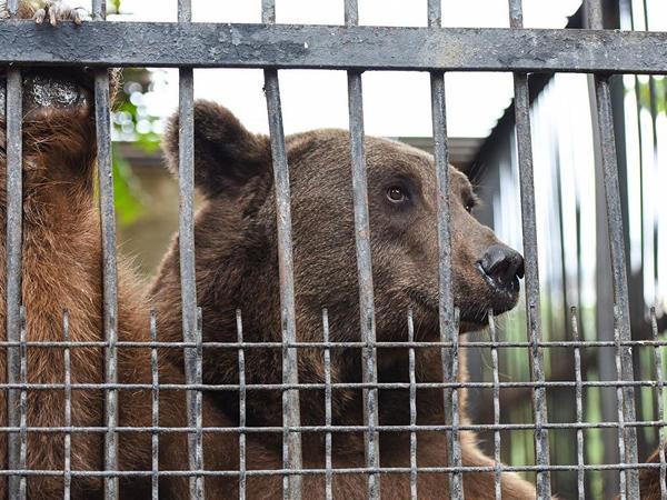 Bakı zooparkının açılacağı tarix və yeniliklər açıqlandı